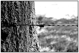 barbed-wire-887279__180[1]